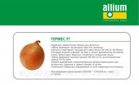 Семена лука Гермес F1 среднеспелый (115дней) высокоурожайный гибрид Allium Италия