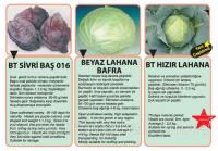 Семена Ранней Капусты Хызыр F1 (HIZIR Lahana) 0.1kg Высокоурожайные Сорта Гибриды BT TOHUM