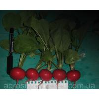Шахри семена редиса 25-30 дн. (Hazera) 500гр