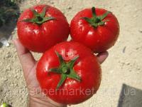 Тайлин F1 Семена томата  тепличный красного 500семян Турция  BT TOHUM