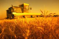Українські аграрії розпочали збирання врожаю вітчизняною технікою