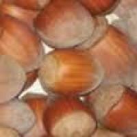 Саженцы фундука Трапезундский