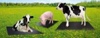 Резиновое покрытие (коврики для с/х животных)