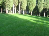 Универсальный газон