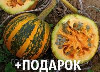 Тыква голосеменная семена 20 грамм (около 100 шт) насіння гарбуза + подарок + инструкции