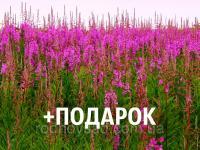 Иван-чай семена 20 шт (кипрей узколистный копорский) насіння Chamaenérion angustifolium + подарок