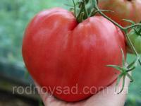"""Томат """"Биче серце"""" рожевий насіння 2 грама (біля 500 шт)"""