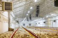 Система вентиляции для птицефабрик