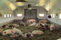 Система вентиляции для свинарников, б/у система вентиляции для свинарников