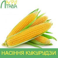 Семена кукурузы ДН Пивиха, Институт зерновых культур НААН Украины