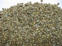 Семена эспарцета оптом. Сорт Песчаный 1251