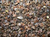 Семена гречихи сорт Дикуль (крупнозернистый) 1–я репродукция