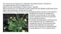 Саженцы Лапчатка кустарниковая / Лапчатка кущова Elizabeth 20-35 3л.