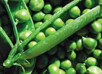 Горох овощной Сальсадо
