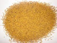 Очистка и калибровка семян горчицы