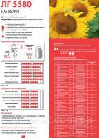 ЛГ 5580 семена подсолнечника Лимагрейн