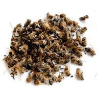 Подмор пчелиный Бджлиний підмор