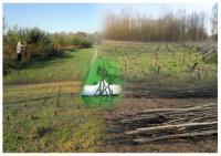 Садженці верби енергетичної швидкоростуча на біопаливо