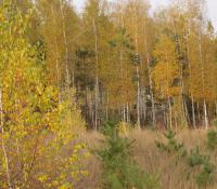 Услуги по посадке деревьев