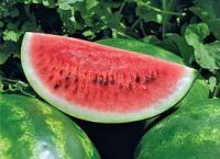 Семена арбуза Арашан (ВДЛ 5003)